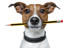 dog with pencil_blog